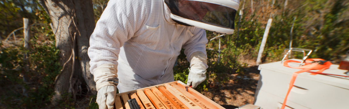 Round Rock Honey Beekeepers and hives