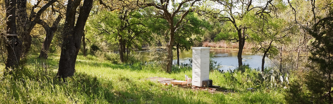 Round Rock Honey Honey Hive